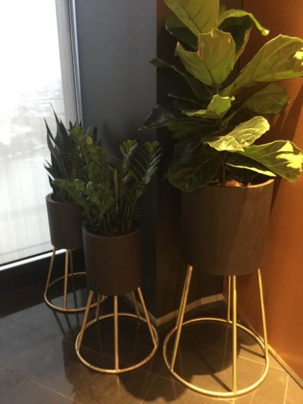 web_ClaytonUtz_plantdetail